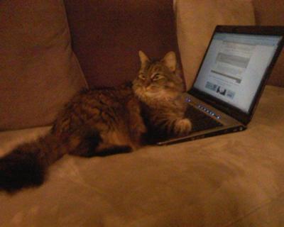 Beginner cat owner
