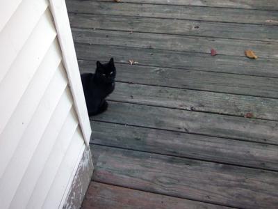 Auntie Black Cat R.I.P.