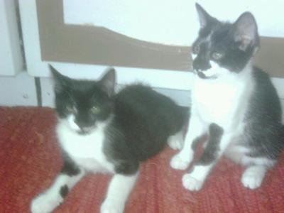 my two kittens