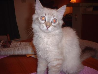 This is Geisha when she was about 4 years old.
