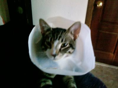 This is right after surgery,  I had to put a collar on him so he wouldn't bite at his stitches