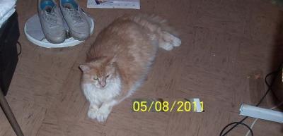 my cat picture taken in Feb. 2011