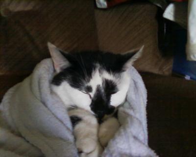 Leelee sleeping