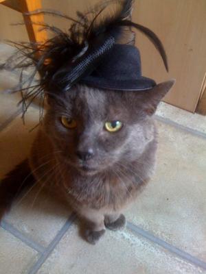 Nigel my cat