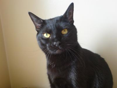 nonnyboy my male cat
