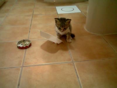 My active kitten