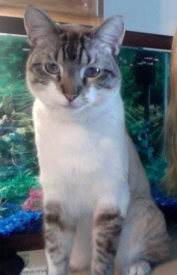 Kovie My Cat