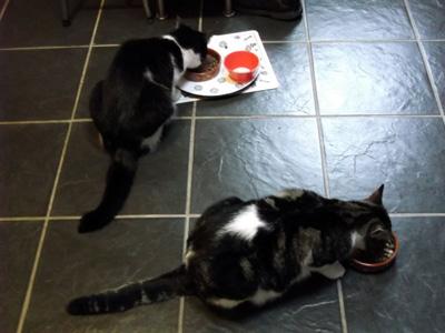 new cat bowls