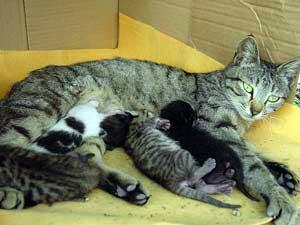 Do Father Cats Take Care Of Kittens