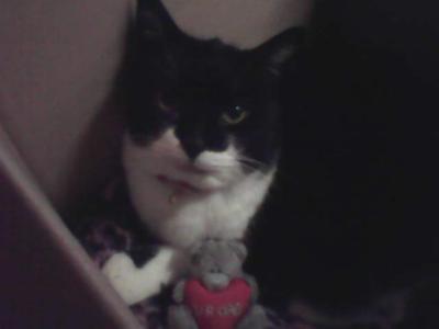 Oddie my cat