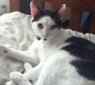Oreo my cat