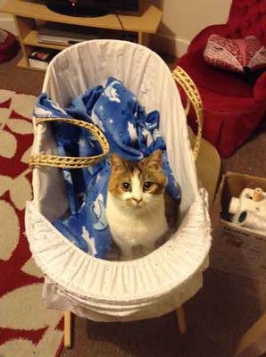 My Sammy Cat