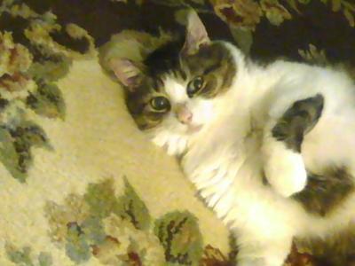 Murphy my cat
