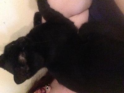 Penelope my cat