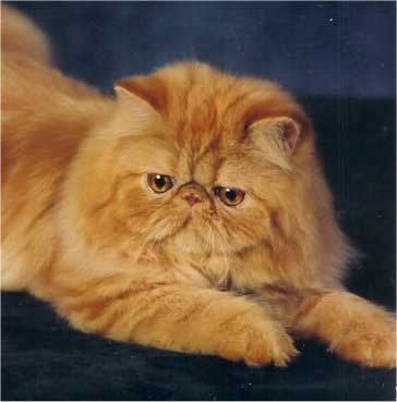 cat repellent home depot
