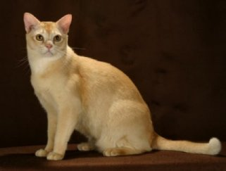 Cat Breed Characteristics Pictures