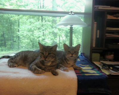 Billy & Lola (My socialized Ferals)