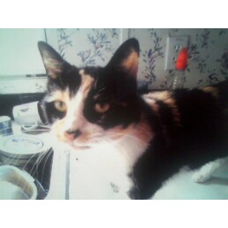 Snickers (I sure Miss her)
