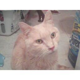 J.J (My FIV + Kitty)