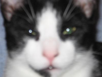 Closeup of Anshel's face