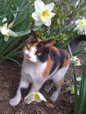Lewie Cat Names