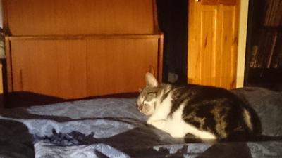 shelley sleeping