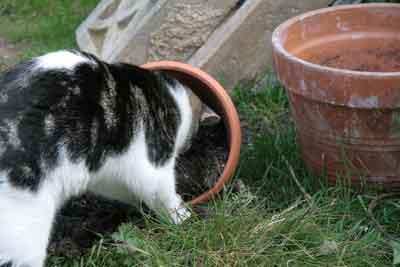 Shelley as a kitten Hunting