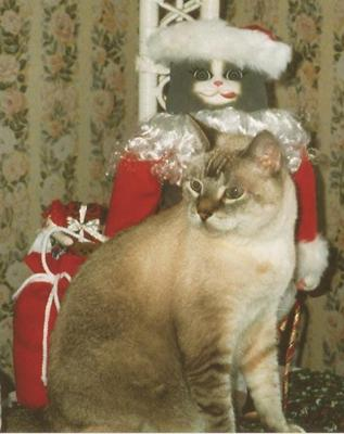 Tatianna the cat