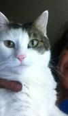 Lucy My Cat