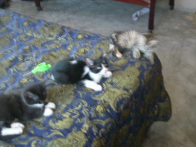 Romeo Chito and Malice our cats