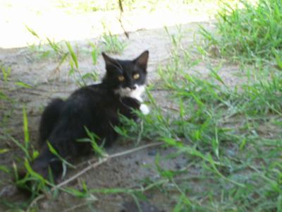 Romeo our cat