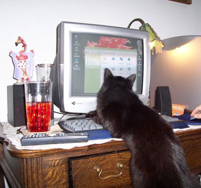 VENUS ON COMPUTER
