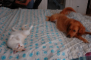 my dog and cat
