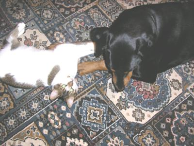 BUGSY PLAYING WITH CHLOE
