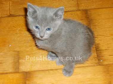 new kittten!