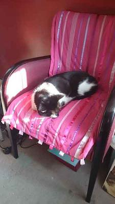 Byron on pink chair