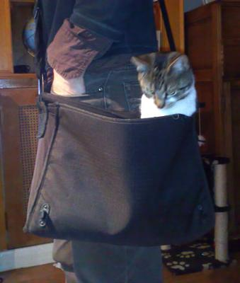 Shelley the Bag cat