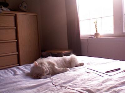 Lazy lazy cat :)