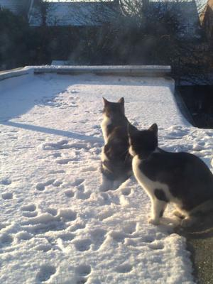 Two Cats In The Snow For The First Time