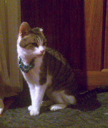Little Mo our cat wearing a necklace