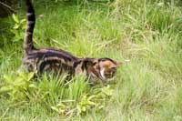 Pixie the cat in the long grass
