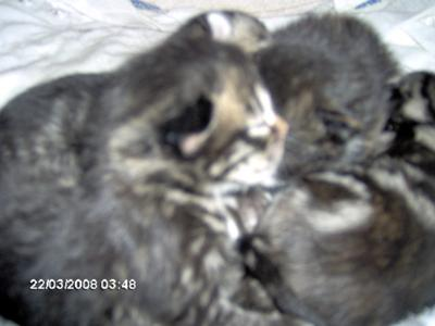 the kittens when i few days old