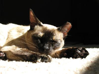 Pooky in the sun.