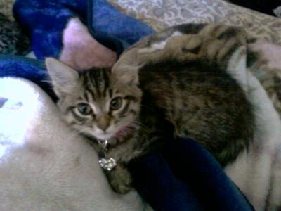 my kittten