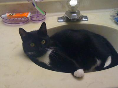 my cat in the sink