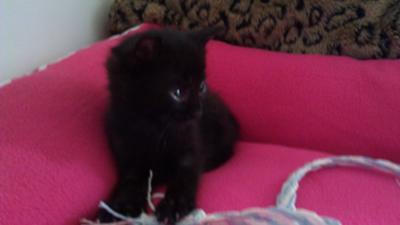 Is My 5 Week Old Kitten Going To Die