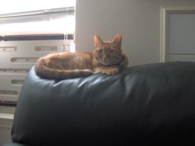 Parker, my cat