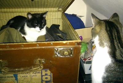 Byron The Box Cat