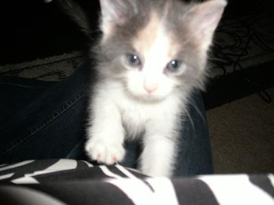 my kitten olivia