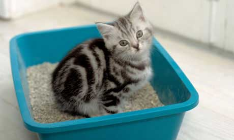 Check Out My Page About Cat Constipation And How To Prevent And Treat It.